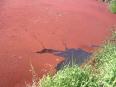 Rudou barvu získal rybník díky prvoku