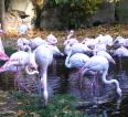 Od zookoutku k zoologické zahradě