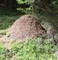 Aktuality - Nechápete mravence? Obraťte se na odborníky