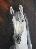 Aktuality - Malířka koní