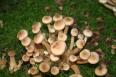 Aktuality - Na houbách s mykologem