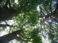 """""""Můj strom"""""""