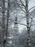Aktuality - Ve Žďáru byly vybrány více než tři desítky stromů ke skácení