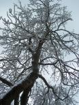 Aktuality - Nad sněhem někteří nadávají, jiní jásají