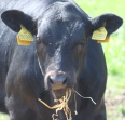 Nová šance pro soukromé zemědělce?