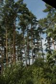 Aktuality - Radní jsou s hospodařením v městských lesích konečně spokojeni