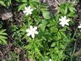 Aktuality - Najděte svou kukačku a pomozte objevit jaro