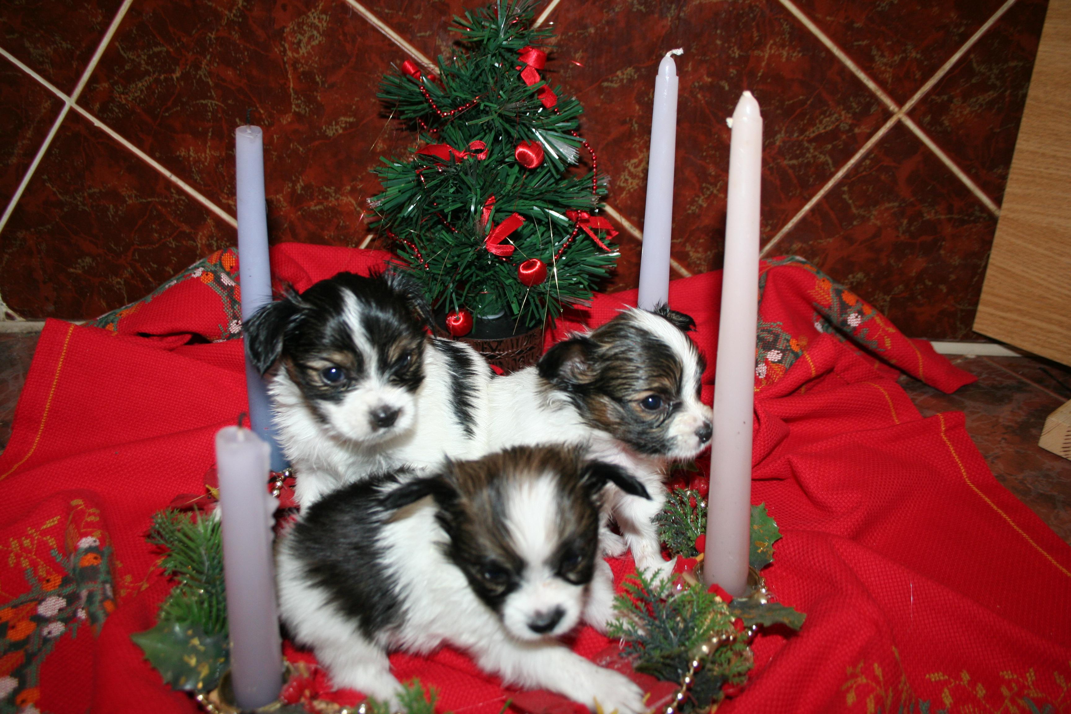 Aktuality - Veselé Vánoce 2008