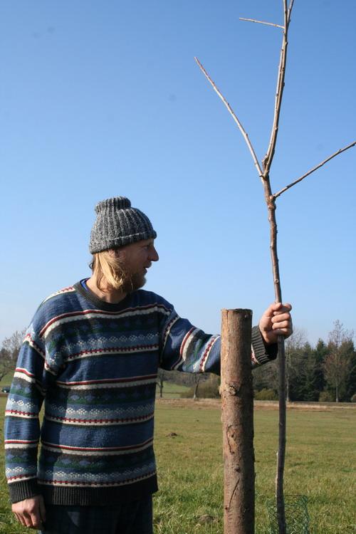 Aktuality - Sdružení Krajina vysadilo další stromořadí