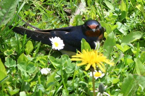 Aktuality - Přicházející jaro už táhne ptáky zpět